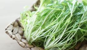 京都の代表的な冬野菜「水菜」