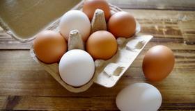 準完全栄養食品「鶏卵」がすごい