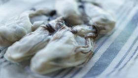 海のミルク!栄養満点の「牡蠣」