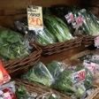 節約して野菜を食べるコツ&レシピ【前編】