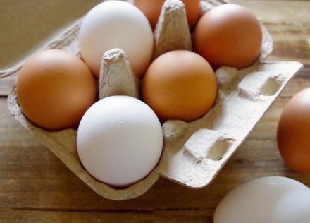 """鶏卵は栄養バランスに優れた""""準完全栄養食品"""""""