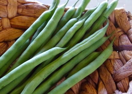 緑黄色野菜「さやいんげん」は栄養たっぷり優秀野菜!